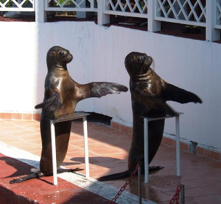 seals clapping